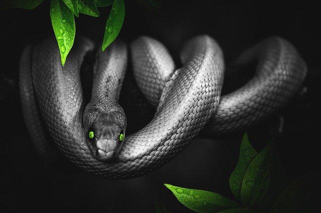 У отрубленной змеиной головы остаётся один смертельный укус
