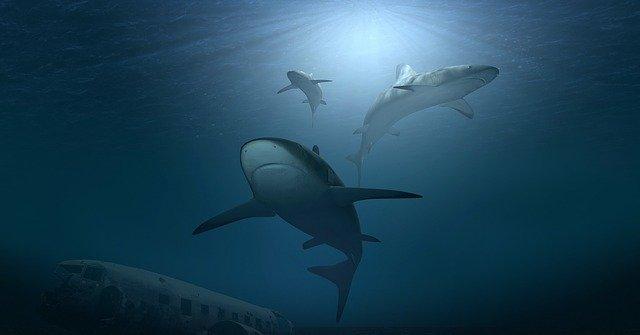 У юной американки не было ни единого шанса спастись от нападения трёх акул. Каникулы на Багамах закончились трагедией.