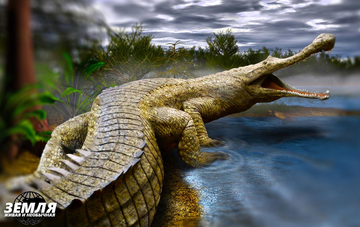 Редкий крокодил с неординарной внешностью