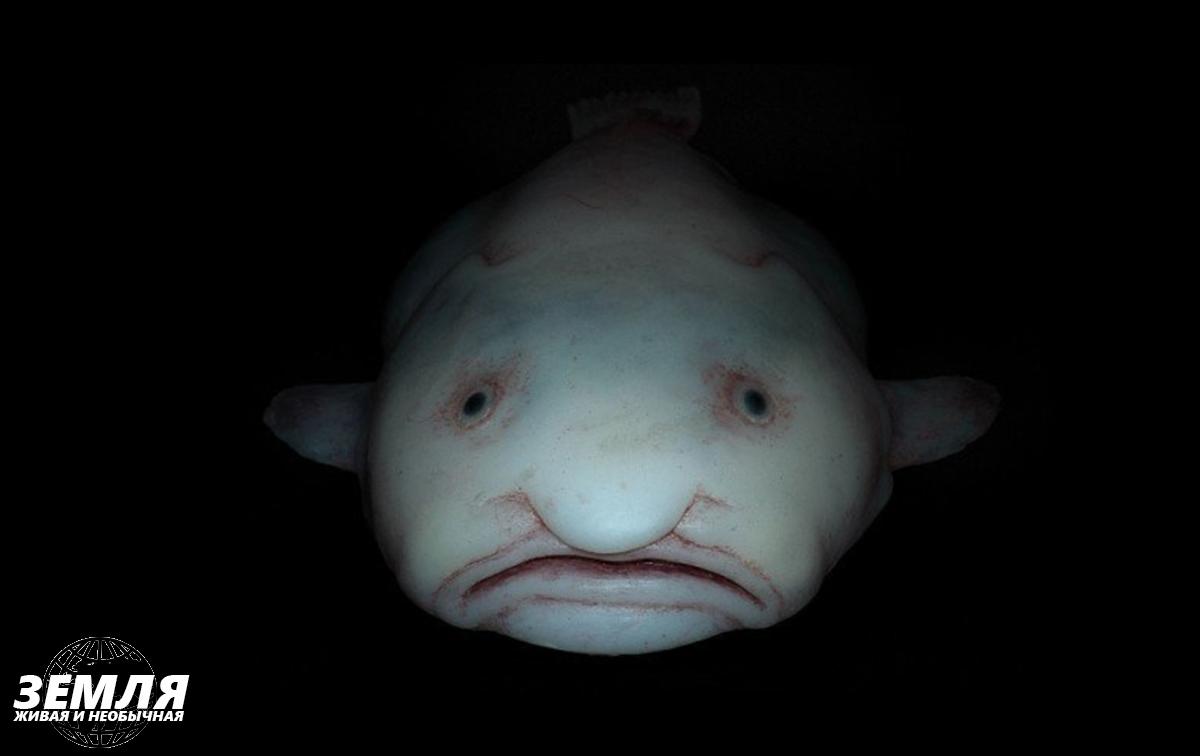 Подводные существа с очень странной внешностью