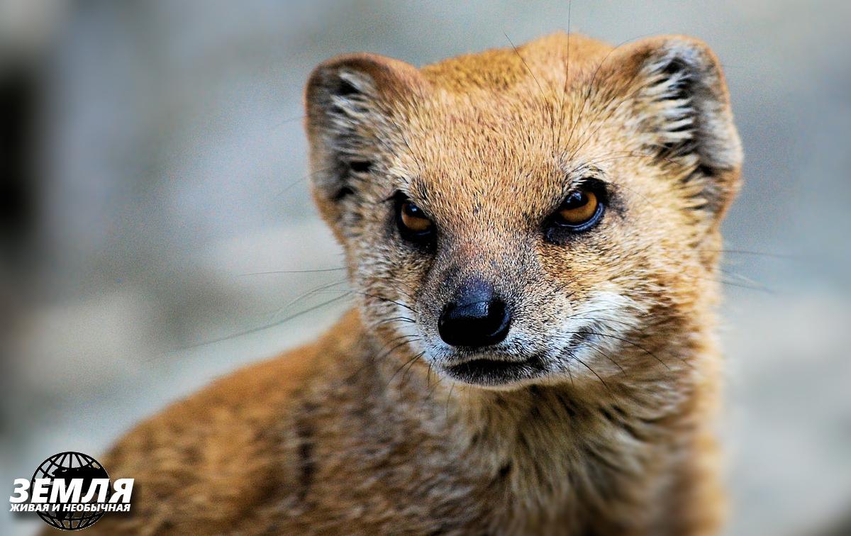 Добыча против хищников: 5 случаев удачного отпора
