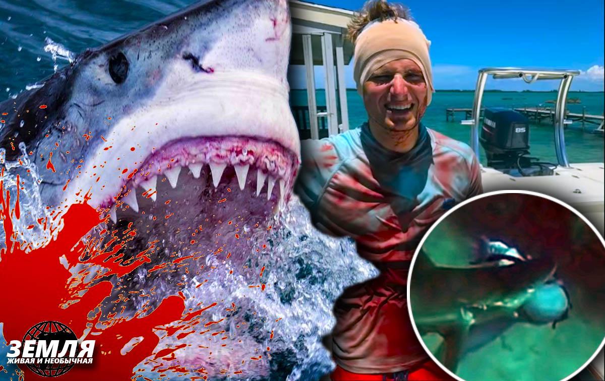 Нападение акул опасно ещё и тем, что всегда происходит неожиданно
