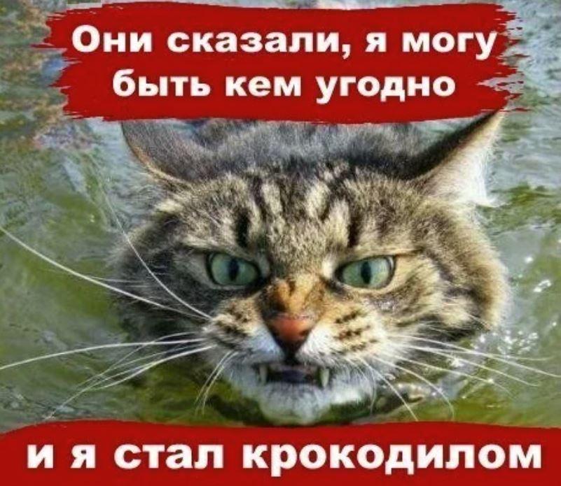 Кот успел несколько раз ударить лапой крокодила