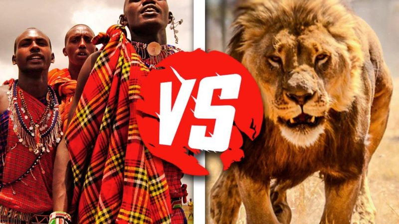 Масаи против льва: прогнали хищника без оружия, лишь напугав его своим видом
